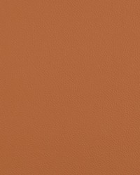 Extreme 6 Umber by