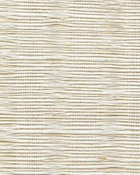 COLLEGIATE STRIPE WNR1195 WT by  Winfield Thybony Design