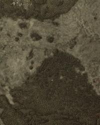 Corvo Beads WSP6305 WT  by
