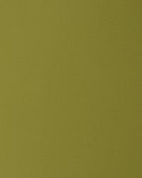 Vinout Kiwi by