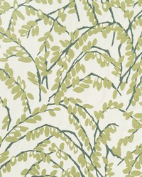 Olive Branch Moss by