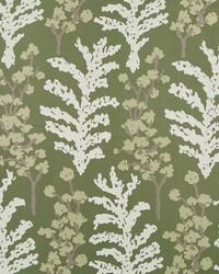 Serene Fern Moss by