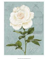 Cream Rose I by