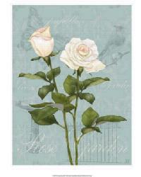 Cream Rose II by