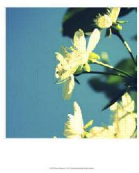 Summer Blossom I by