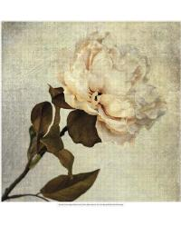 Lush Vintage Florals II by