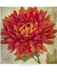 Lush Vintage Florals III by