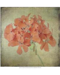 Lush Vintage Florals IX by