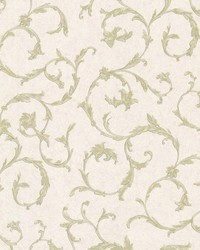 Clover Green Acanthus Scroll by  Brewster Wallcovering
