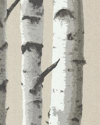 Irvin Grey Birch Tree  by