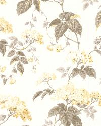Emily Yellow Blossom Trail by  Brewster Wallcovering