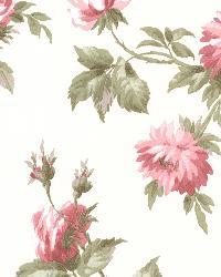 Charlotte Pink Vintage Rose Toss by  Brewster Wallcovering