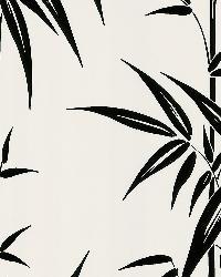 Saharan White Bamboo Stalk by  Brewster Wallcovering