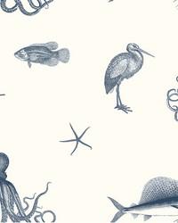 Oceania Navy Sea Creature Wallpaper by