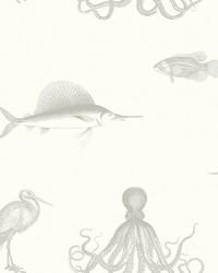Oceania Grey Sea Creature Wallpaper by