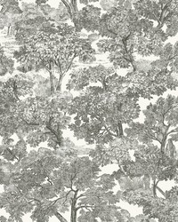 Spinney Black Toile Wallpaper by