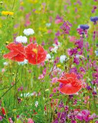 Fiesta De Flores Multicolor Flower Meadow by