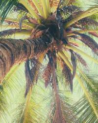La Palmera Green Vertical Palm View by