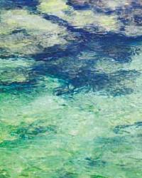 El Aqua Aqua Tropical Moire Sea by