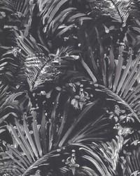 Adopsis Black Botanical by