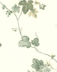 Ivy Green Ivy by