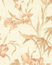 Iris Peach Iris Floral by