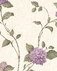 Beige Hydrangea Blossom by