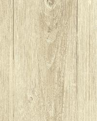 Mapleton Birch Faux Wood Texture by  Brewster Wallcovering