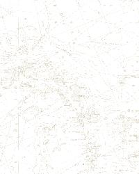 Canaveral Beige Charts by  Brewster Wallcovering