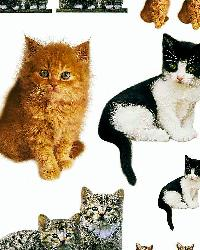 Kitty Wall Decals by