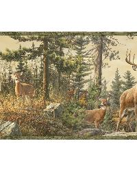 Fern Green Whitetail Portrait Border by  Brewster Wallcovering