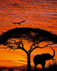African Sunset by