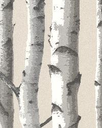 Tuxbury Beige Birch Tree by